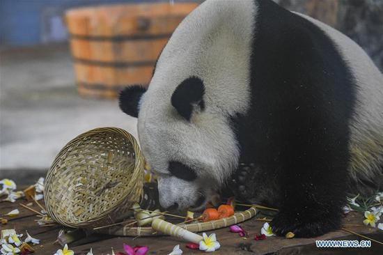 Seventh birthday of two giant pandas celebrated in Haikou