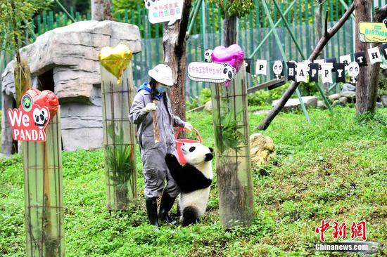 Panda cubs celebrate first birthday in Sichuan