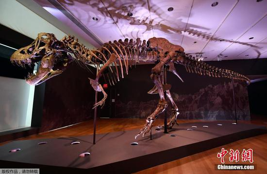 One of the world's biggest T. rex skeletons is up for sale